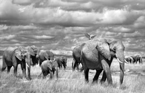 Elephants of Kenya by Marina Cano