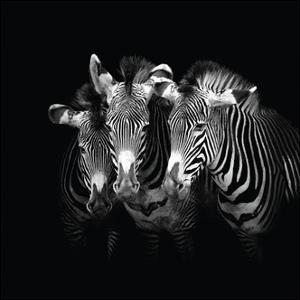 Shades of Grevy by Marina Cano