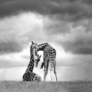 Tenderness by Marina Cano