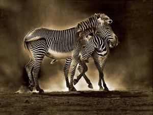 Zebra Grevys by Marina Cano