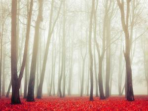 Autumn Landscape with Tall Bare Trees and Red Dry Fallen Leaves Covering the Ground by Marina Zezelina