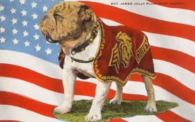 Marine Corp Boxer Dog with Flag