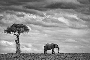 Elephant Landscape by Mario Moreno