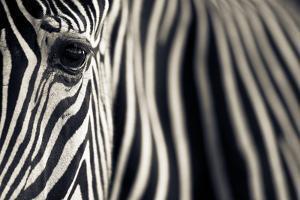 Eye and Stripes by Mario Moreno
