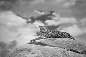 Leopard on a Kopje by Mario Moreno