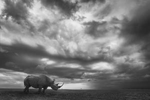 Rhino Land by Mario Moreno