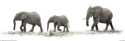 Mario Moreno - The Elephants