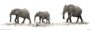 Mario Moreno - The Elephants