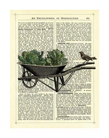 Wheelbarrow Lettuce & Bird