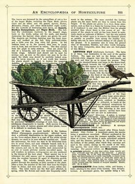 Wheelbarrow Lettuce & Bird by Marion Mcconaghie