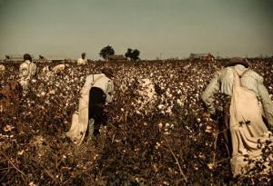 African American Day Laborers Picking Cotton Near Clarksdale, Mississippi, November 1939 by Marion Post Wolcott