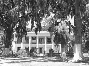 Jackson Plantation Home by Marion Post Wolcott