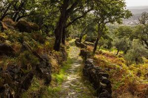 A Roman Road & cork trees near Monsanto, Portugal by Mark A Johnson