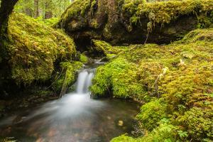 Beautiful stream in the lush Tongass National Forest, Alaska by Mark A Johnson