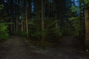 Forest path, Sitka National Historic Park aka Totem Park, Sitka, Alaska by Mark A Johnson