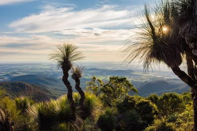 Grass Trees on Mt Kiangarow, Bunya Mountains National Park, Queensland, Australia by Mark A Johnson