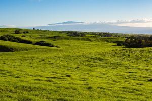 Lush pasture land, Waimea, Big Island, Hawaii by Mark A Johnson