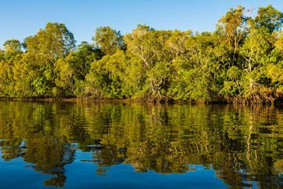 Reflections of mangroves in Pumicestone Passage, Queensland, Australia by Mark A Johnson