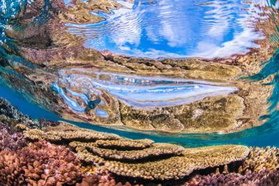 Reflections on a coral reef-Underwater view of a wave breaking over a coral reef by Mark A Johnson