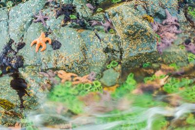 Starfish, Bamdoroshni Island off the coast of Sitka, Alaska by Mark A Johnson