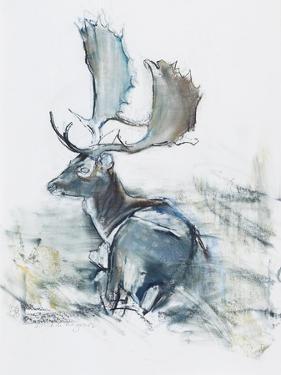 Buck in the Grass, 2006 by Mark Adlington