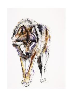 European Wolf by Mark Adlington
