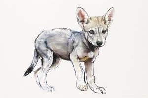 Hesitating Arabian Wolf Pup, 2009 by Mark Adlington
