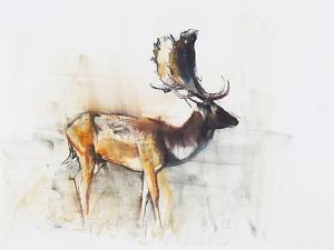 Magnificent Fallow Buck, 2006 by Mark Adlington
