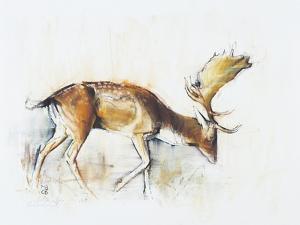 Pisanello Buck, 2006 by Mark Adlington