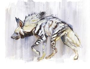 Striped Hyaena, 2010 by Mark Adlington