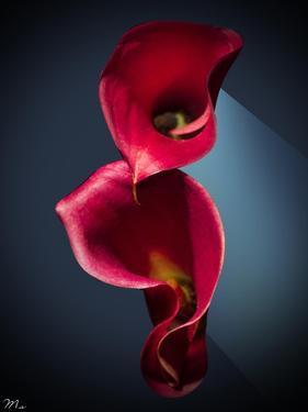 Cala Lilies 2 by Mark Ashkenazi