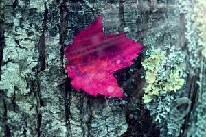 Leaf by Mark Ashkenazi