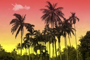 Palm Trees by Mark Ashkenazi