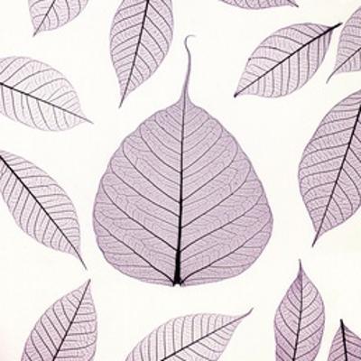 Leaf X-ray