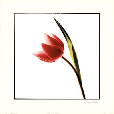 Tulip Impressions I