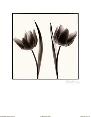 Tulip Shades II by Mark Baker