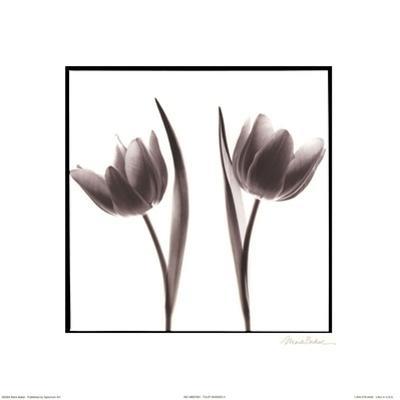 Tulip Shades II