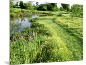 Large Wild Pond, Mown Grass Path Through Ranunculus (Buttercup) Meadow by Mark Bolton