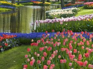 Spring Tulips by Stream by Mark Bolton