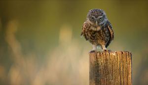 Look Into My Eyes by Mark Bridger