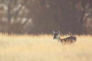 Small One by Mark Bridger