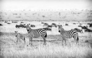 Stripes by Mark Bridger