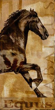 Caballus II by Mark Chandon