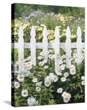 Picket Fence - Fine by Mark Chandon