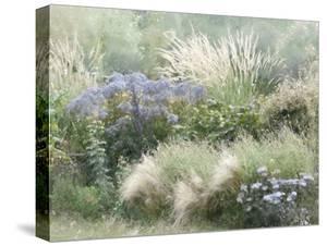 Prairie Field - Flourish by Mark Chandon