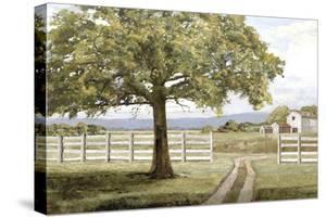Shady Tree by Mark Chandon