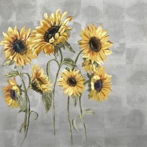 Sunflower Burst by Mark Chandon