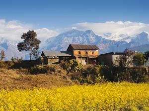 Mustard Fields with the Annapurna Range of the Himalayas in the Background, Gandaki, Nepal, Asia by Mark Chivers