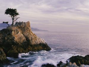 Lone Cypress Tree on a Rocky Point Near Pebble Beach by Mark Cosslett