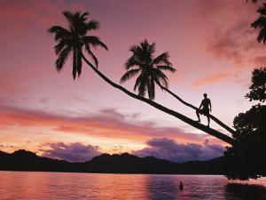 Man, Palm Trees, and Bather Silhouetted at Sunrise by Mark Cosslett